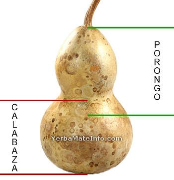 Kalabasa a Porongo